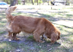 MARY- Bankisa Park Puppies - 1 of 26 (4)