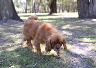 MARY- Bankisa Park Puppies - 1 of 26 (9)