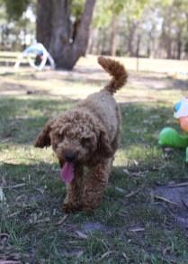 AJ - Bankisa park puppies - 1 of 47 (15)