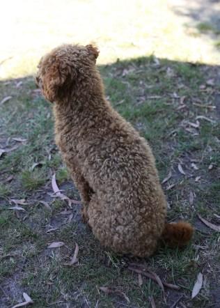 AJ - Bankisa park puppies - 1 of 47 (31)