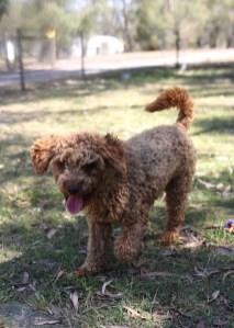AJ - Bankisa park puppies - 1 of 47 (32)