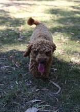 AJ - Bankisa park puppies - 1 of 47 (36)