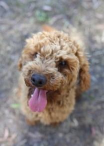 AJ - Bankisa park puppies - 1 of 47 (38)
