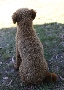 AJ - Bankisa park puppies - 1 of 47 (41)