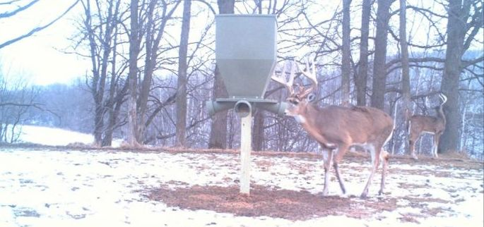 Using a Deer Gravity Feeder during the Winter