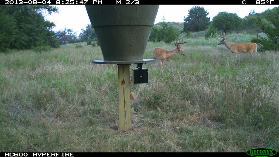 Providing bucks with nutrition during the off season is vital to antler growth.
