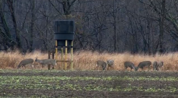 Hunting Blind Placement For All Phases Of The Season