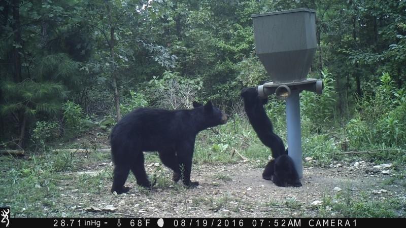 Bear Tough Deer Feeders - Banks Outdoors
