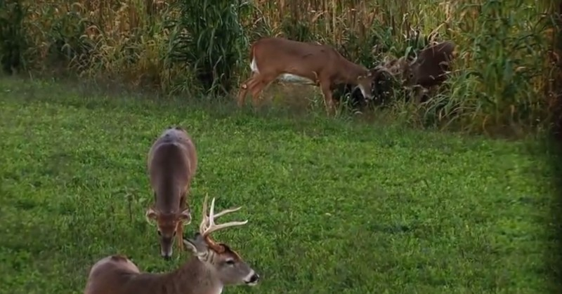 Some of the best days to deer hunt fall at the end of October, when the rut is beginning in a large swath of the country.