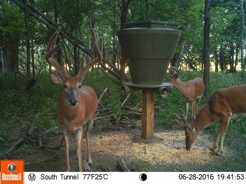 Feed Bank 600 Gravity Deer Feeder Banks Outdoors
