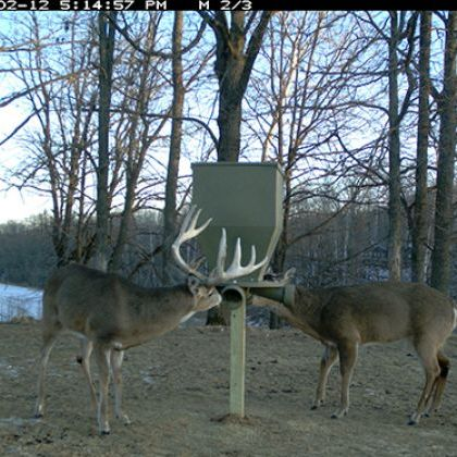 feeders for photo pole gallery of x sale hanging feeder deer pictures