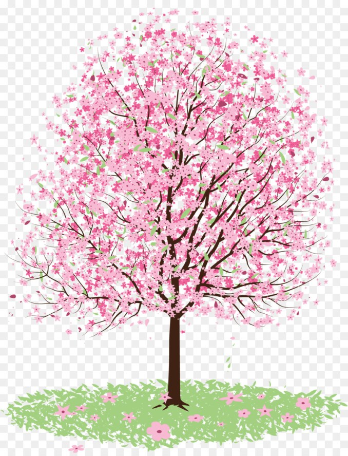 Cherry blossom Tree Drawing - cherry blossom 1768*2302