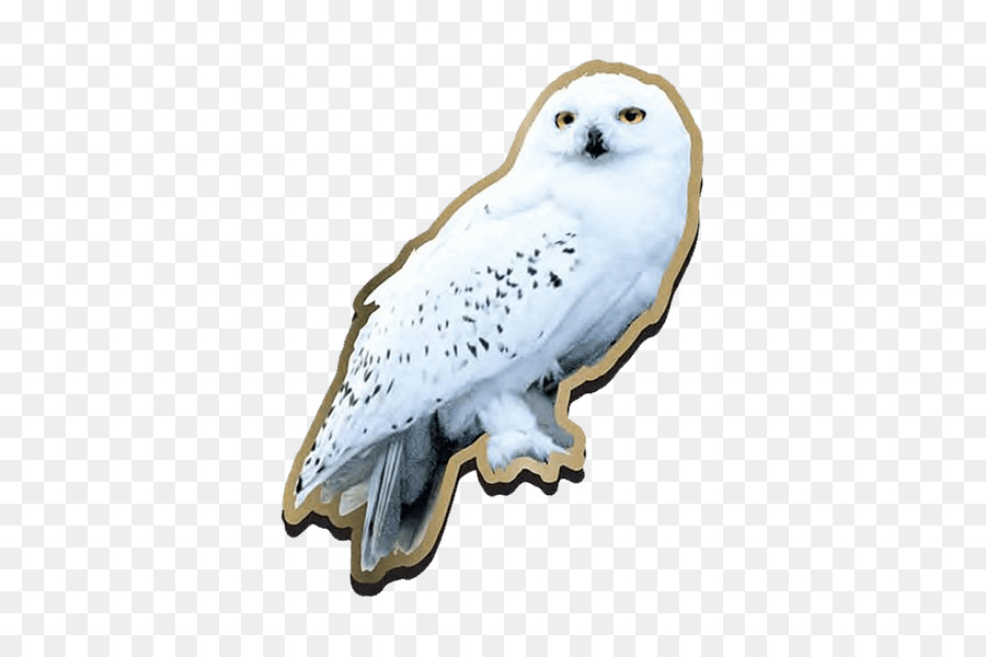 Garr     Potter Harry Potter and the Deathly Hallows Fictional universe     Garr     Potter Harry Potter and the Deathly Hallows Fictional universe of Harry  Potter Hedwig Harry Potter  Literary Series    harry potter Owl