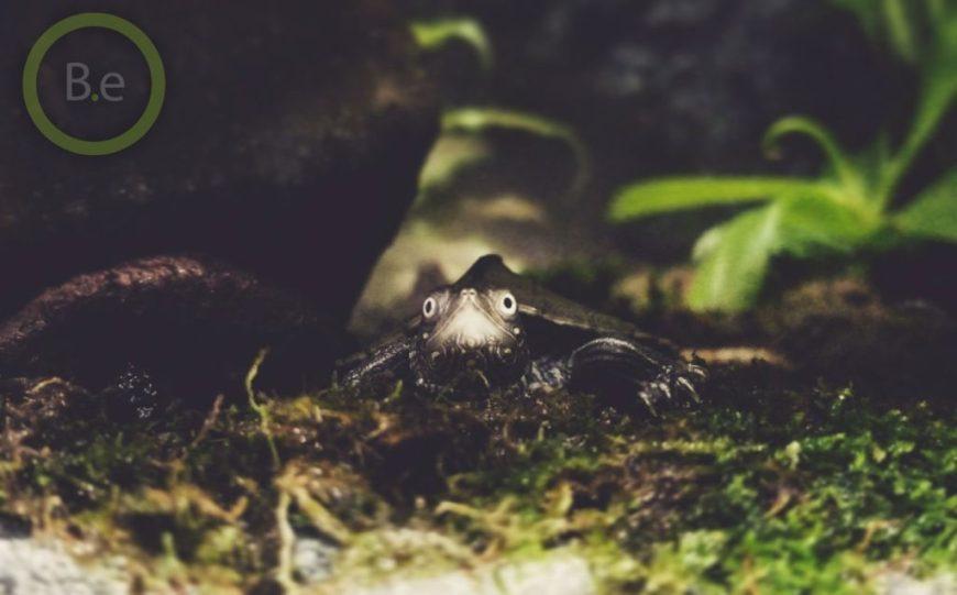 turtles are great paludarium animals