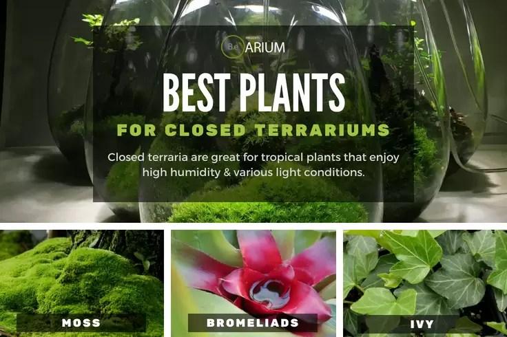 best types of closed terrarium plants