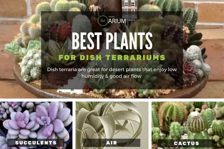 best types of dish terrarium plants