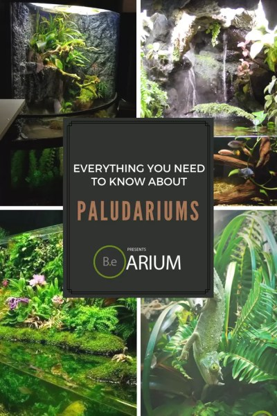 everything you need to know about paludariums