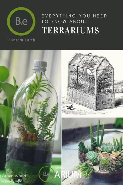 the ultimate terrarium guide