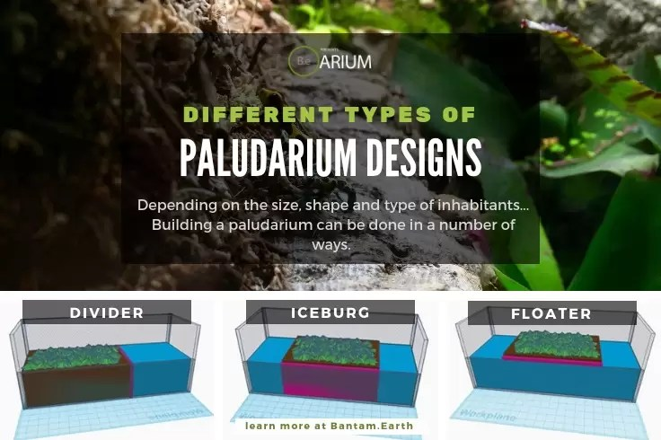 different types of paludarium designs