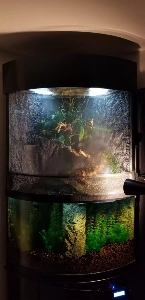 paludarium build