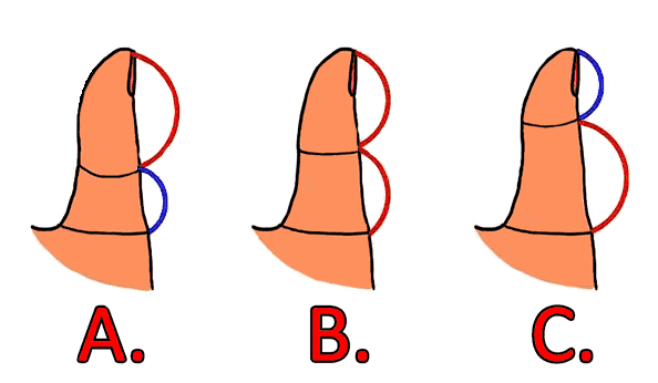 Here is what the length of your thumb reveals about your Personality and Relationship