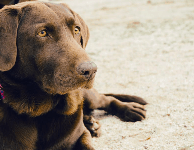 Your Personality Based On The Dog Breed You Pick