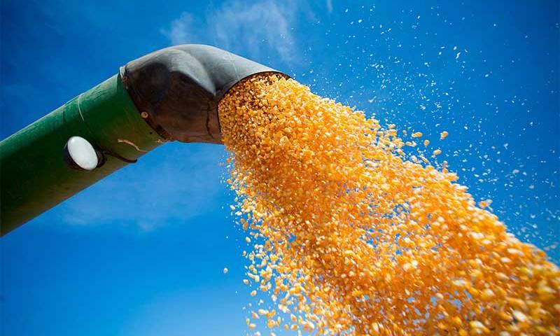 Safra de grãos deve crescer 6,3% e fechar com recorde em 2019