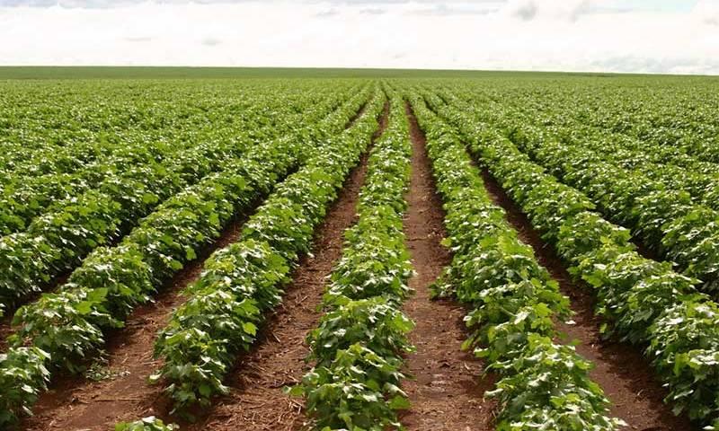 Agricultura sem queima na Amazônia é recomendada pela Cepal