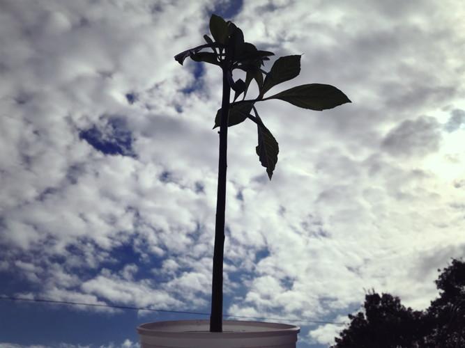 バオバブの木に水やり2018.11.20