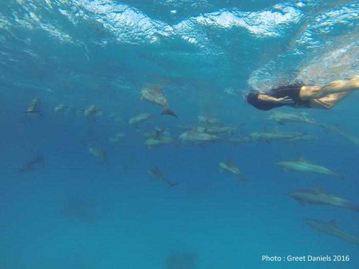 dauphins-greet