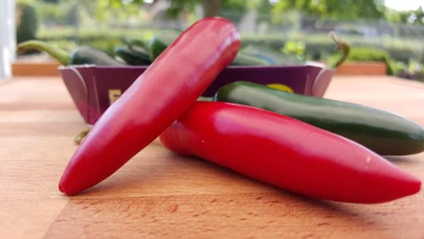 Rote und grüne Jalapenos bringen Farbe in Spiel