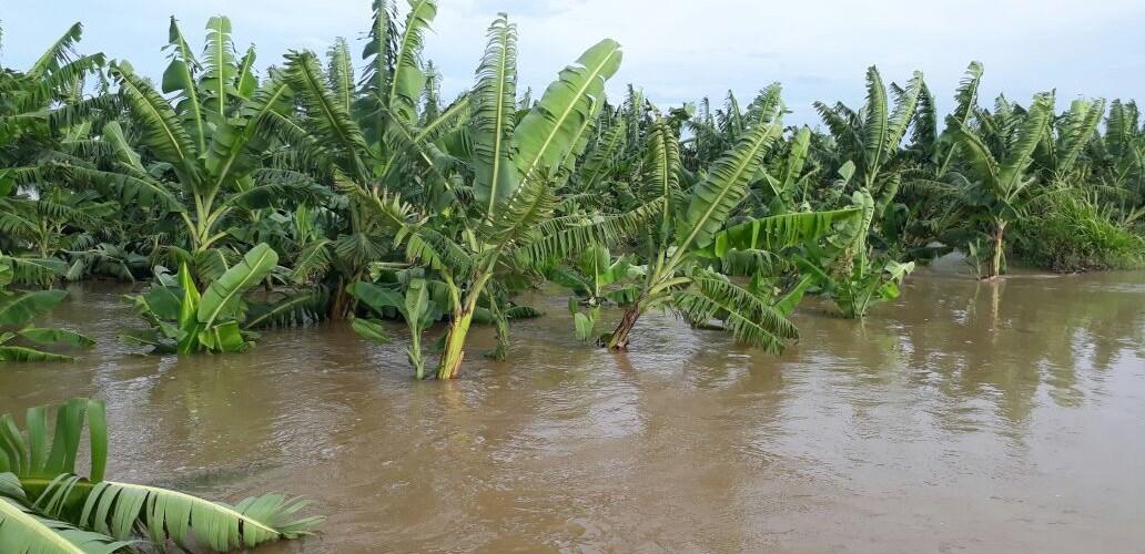 Río Yaque inunda zonas Línea Noroeste