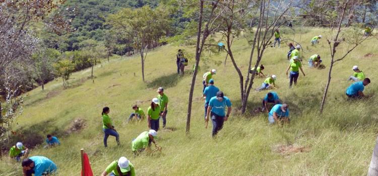Edenorte reforesta zona del Plan Sierra