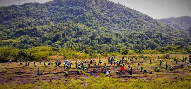 Edenorte reforesta zona en Damajagua
