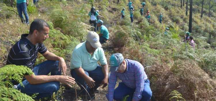 Edenorte reforesta zona de la Loma Guaigüí