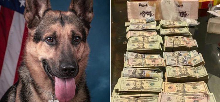 Perro detecta droga escondían dominicanos