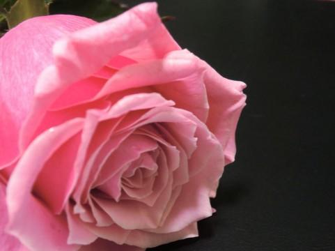双松バラ園 バラ見ごろ