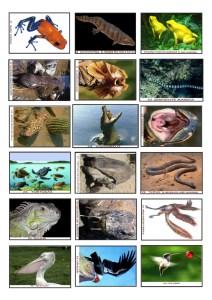 cromosvertebrados