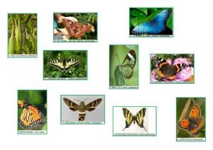 mariposascromos