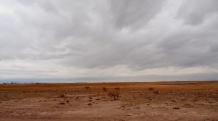 The Kenyan landscape is breathtaking