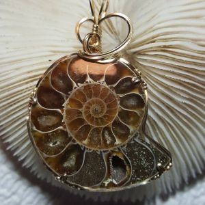 Ammonite Pendant, Wire Wrapped in 14 k Gold Filled Wire