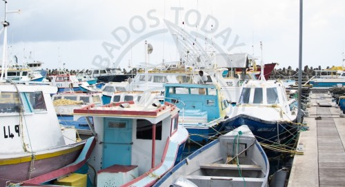 Some of the boats in the Bridgetown Fisheries Complex were tied together in an effort to minimize the possible damage from Tropical Storm Kirk.