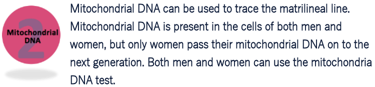 Mitochondrial DNA traces the matrilineal line
