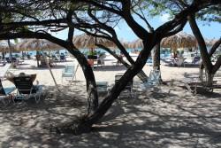 barbarakolson.com in Aruba
