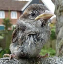 A baby bird in Canterbury