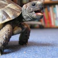 I don't want to hibernate said the little tortoise
