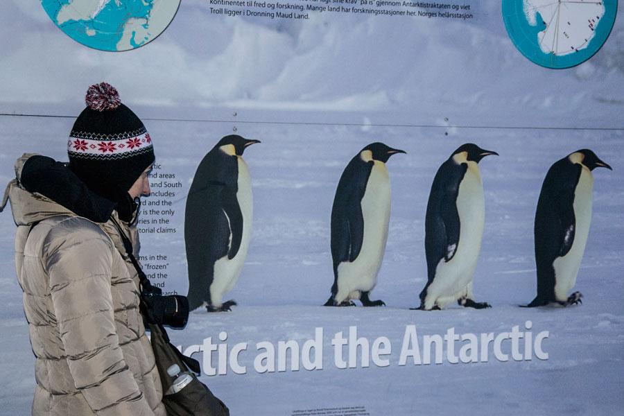 Barbara Oggero fotografia fotografa di storie blog immagine david tipling pinguini imperatori