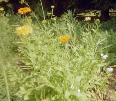 wildflowers08