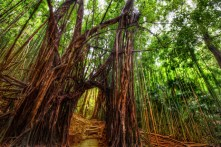 The Secret Path Through the Bamboo Forest (Oahu, Hawaii)