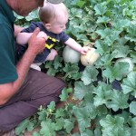 Cody picks out ripe cantaloupe!
